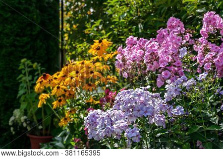 A Flower Bed With Different Flowers, Mainly Rudbeckia And Phlox, Against The Background Of A Garden