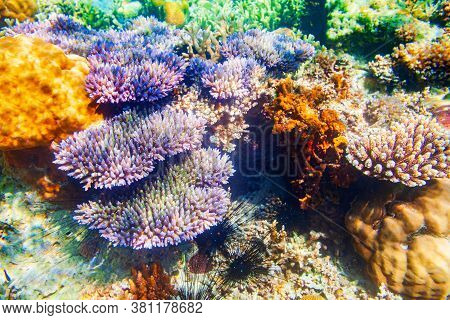 Underwater Coral Reef Tropical Sea View Landscape