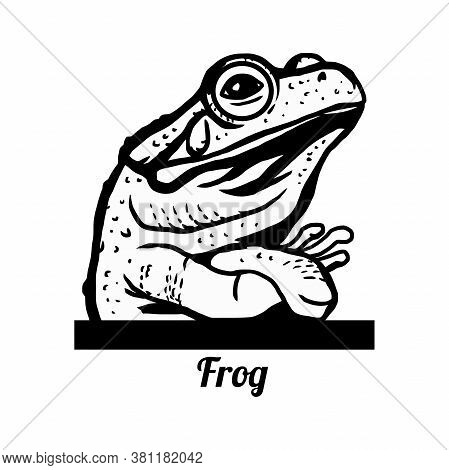 Haughty Frog - Funny Frog Peeking Out - Face Head Isolated On White