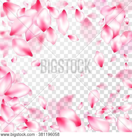 Spring Tree Flowers Parts, Airy Flying Petals On Transparent Background. Botanical 3d Particles. Flo