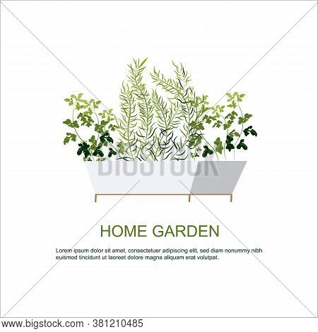 Home Garden. Herbs Garden. Home Gardening. Horticulture. Houseplants. Thyme, Parsley, Rosemary.