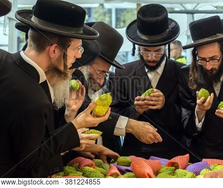 JERUSALEM, ISRAEL - SEPTEMBER 20, 2018: The concept of photo tourism. Religious Jews are buying etrog - the fruit of  magnificent tree. The holiday bazaar in Jerusalem on the eve of Sukkot