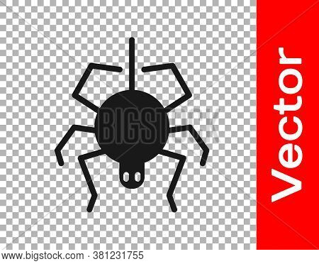 Black Spider Icon Isolated On Transparent Background. Happy Halloween Party. Vector