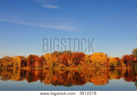 Autumn Tree Scape