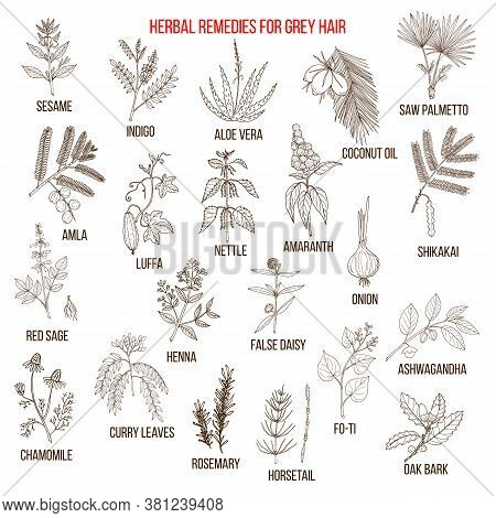 Best Herbal Remedies For Gray Hair. Hand Drawn Vector Illustration