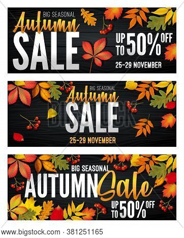 Advertising Banners Set - Autumn Sale At The End Of Season With Bright Fall Leaves. Invitation For S