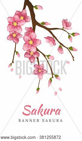 Sakura. Greeting Card Banner Or Invitation Card With Blossom Sakura Flowers. Blooming Flowers Illust