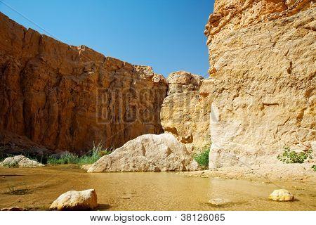 Mountain Oasis Tamerza.