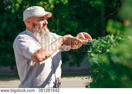 Home And Garden Concept. Gardener Trimming Hedge. Bush Pruning Work. Gardening And Cutting Activitie