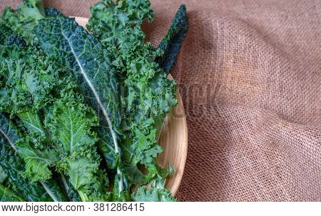 Fresh Organic Kale Twigs And Leaves, And Tuscan Kale, Or Dinosaur Kale, Are High In Fiber And Vitami