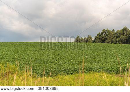 Soybean Plantation And Production Farm In Brazil-9.nef