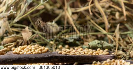 Soya Beans (glycine Max) Scattered On Wooden Spoons On Vegetable Background