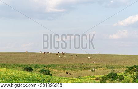 Production And Livestock Fields On The Border Of Brazil And Uruguay