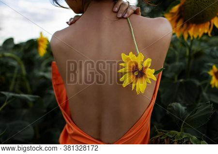 Beautiful Sexy Woman With Healthy Back And Health Skin In Flower Field.
