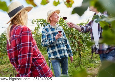Winegrowers drink a glass of red wine together in the vineyard during the wine harvest