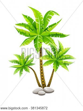 Tropical coconut palm trees, plants with green leaves in stones. Nature detail. Coco palm-tree, isolated on white transparent background. 3D illustration.