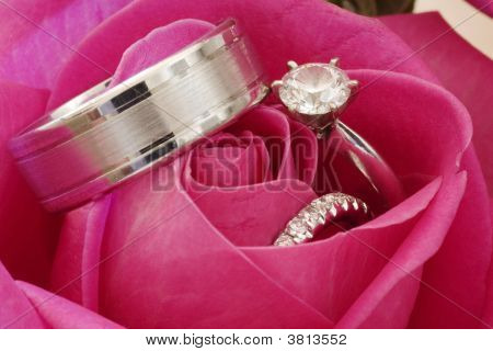 Wedding Rings In Red Rose