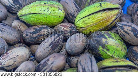 Heaped Fruits Of Pecan Or Pecan (carya Illinoinensis)