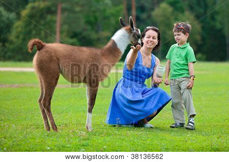 Young woman and her little son feeding baby lama in farm poster