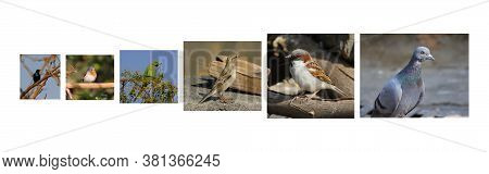Different Types Of Birds Images ( Male Sparrow Bird, Female Sparrow Bird, Rock Pigeon Dove, Yellow N