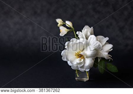 Vase With Blooming White Dogrose And A Sprig Of Jasmine On A Black Background.