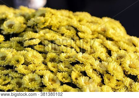 Bunch Of Yellow Grave Flowers Lit By Warm Afternoon Sun Put On Grave During All Souls' Day