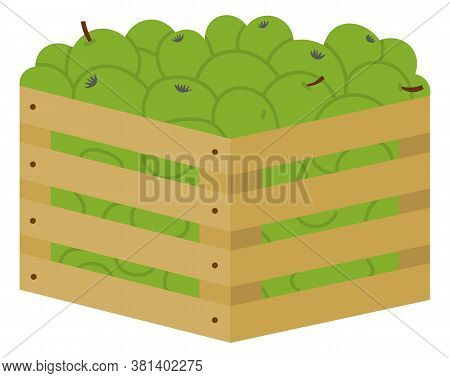 Wooden Boxe Full Of Green Ripe And Fresh Fruits. Container With Green Apples. Fall Harvest, Orchard