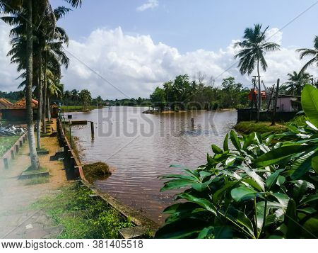 Nature Water Bodies With Greenery Near To It And Floating Ducks.the Water Frontage View With Trees A