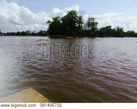 Nature Water Bodies With Greenery Near To It And Floating Ducks.