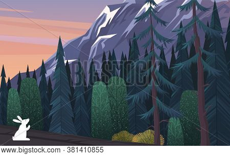A White Hare Sits On The Edge Of A Coniferous Dense Gloomy Dark Blue Forest. Rock Background. High M