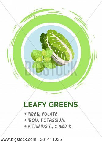 Leafy Green Vegetables. Useful Ingredient For Vegetarian Salad. Organic Food. Green Leafy Vegetables