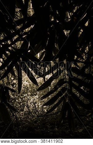 The Silhouetted The Bamboo Plants Leave In A Dark View