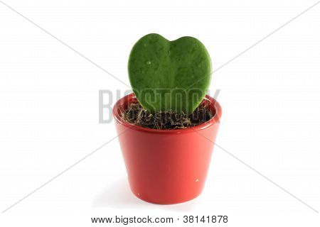 flower in a pot