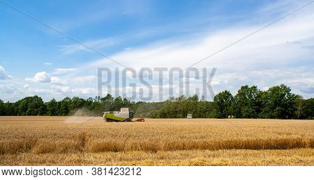 Modern Combine Harvester Harvests Ripe Wheat In Field, Against Of Trees And Blue Sky With Clouds. Tr