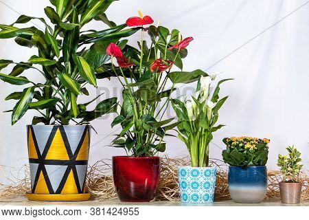 Dracaena Fragrans Cintho In Hand Painted Pot, Anthurium Laceleaf, Arum Lily, Kalanchoe, Widow's-thri