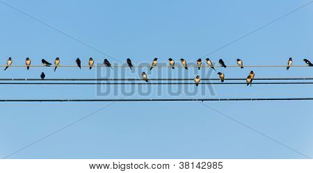 Many Swallows On A Wire