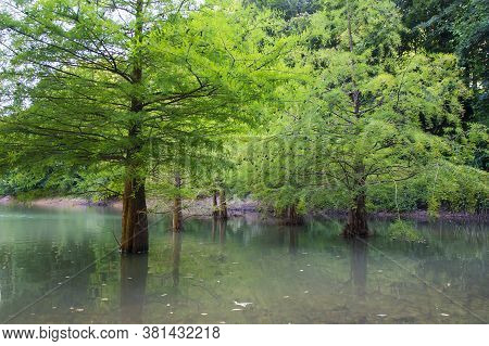 View Of Ataturk Arboretum Botanic Park In Istanbul, Trees Body In The Lake Landscape