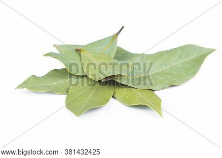 Leaves Of Daphne, Bay Or Laurel Isolated On White Background. Laurus Nobilis Leaf Gives Food Fragran