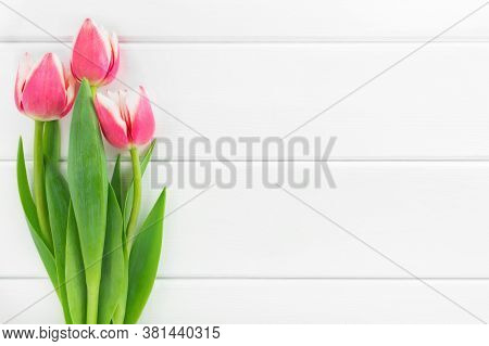 Three Pink And White Tulips On White Wooden Background. Celebration Concept, Top View, Copy Space.