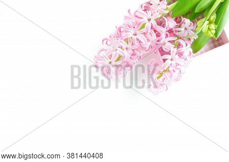 Beautiful Pink Hyacinth Flower Isolated On White Background. Celebration Concept, Top View, Copy Spa