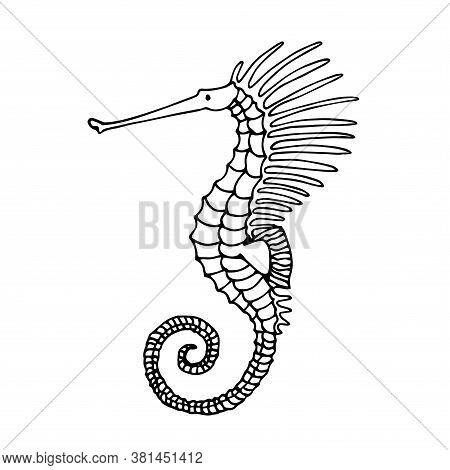 Decorative Seahorse, Exotic Marine Creature, Reef Fish, For Icon, Logo Or Emblem, Vector Illustratio
