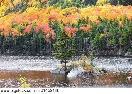 Pine tree island in beaver pond during autumn time in rural Vermont