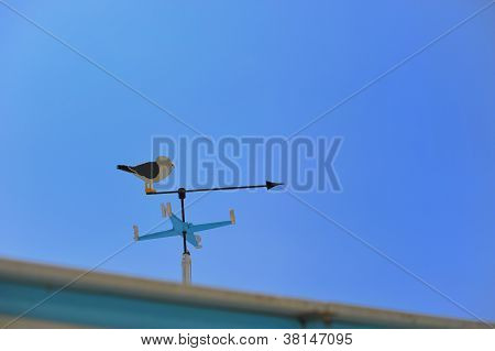 Weather Vane With Iron Seagull