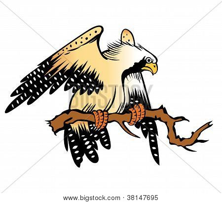 Eagle Cartoon