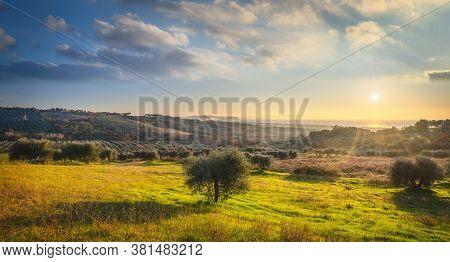 Maremma Sunset Panorama. Olive Trees, Countryside And Sea On Horizon. San Vincenzo, Tuscany, Italy.