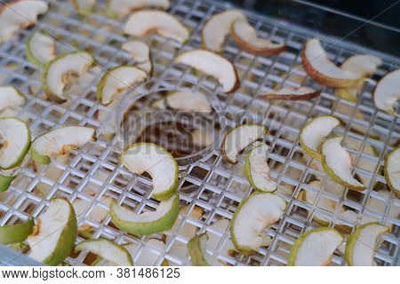 Dehydrating Sheets With Pieces Of Apples. Vegetarian Apple Chips In Food Dryer. Slices Apples. Healt