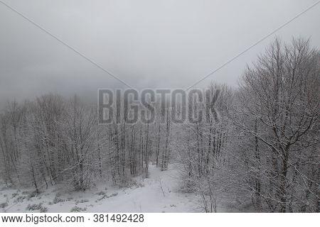 Winter Snowy Forest Aerial Landscape In Ukrainian Carpathian Mountains