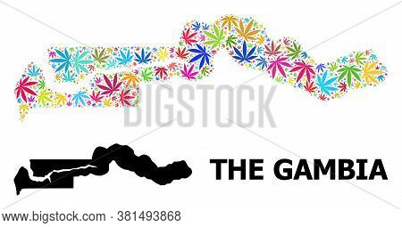 Vector Weed Mosaic And Solid Map Of The Gambia. Map Of The Gambia Vector Mosaic For Marijuana Legali