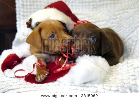 Puppy For Christmas