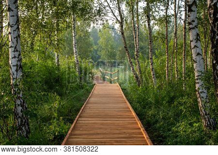 A Wooden Path Walkway Through Birch Grove. Building A New Path In A Park, Repair And Reconstruction